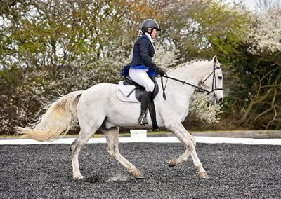 Home Page Dressage